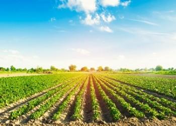 Important Information on the Black Farmers Discrimination Litigation