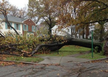 Falling Trees Make More Than Just a Mess; Who is Responsible?